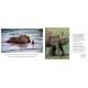 Lai-Lai The Baby Elephant/Nanha Hathi Lai-Lai (English-Hindi)