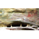 Cave Art - The First Paintings (English)